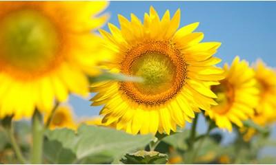 Сонячний настрій